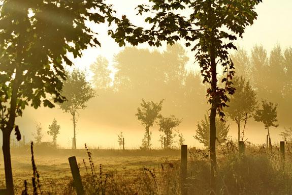 Morgentliche Baumlandschaft, Morgennebel
