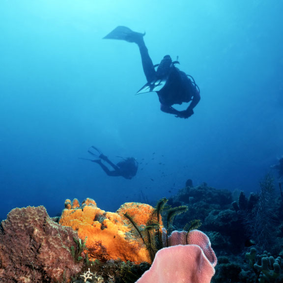 Rodneys Rock, Dominca, Karibische Inseln, Karibik
