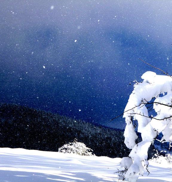 Schneeflocken bringen den Winter in den Thüringer Wald