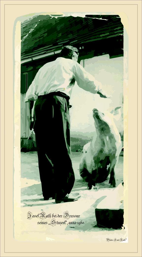 """Bild Opa Rath bei Dressur seines Schweinderls """"Stuzerl"""" anno 1960"""