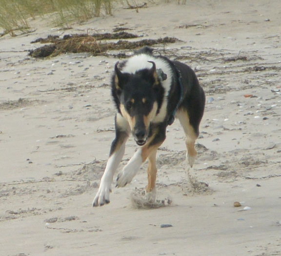 Blade rennt an einem Strand schnell auf die Kamera zu.