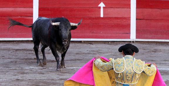 Le taureau est le mâle de l'espèce bovine. Il apparait à plusieurs reprises dans la Bible. Son instinct combattif et colérique est utilisé en tauromachie.