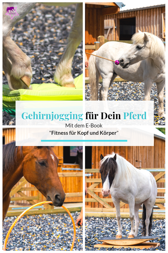 Gehirnjogging und Muskeltraining für Pferde