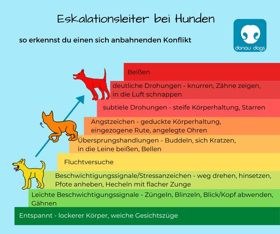 Eskalationsleiter bei Hunden