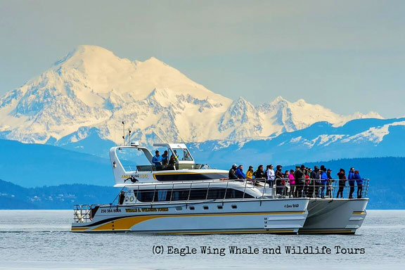 Katamaran 4 Ever Wild (C) Eagle Wing Whale & Wildlife Tours