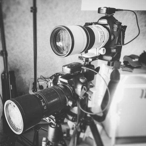 oben Canon mit dem 300mm F4 unten Sony Alpha 77 mit Sigma 300 F4