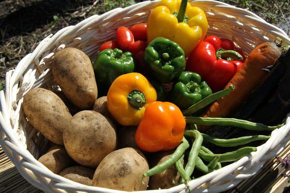 9月に収穫された野菜