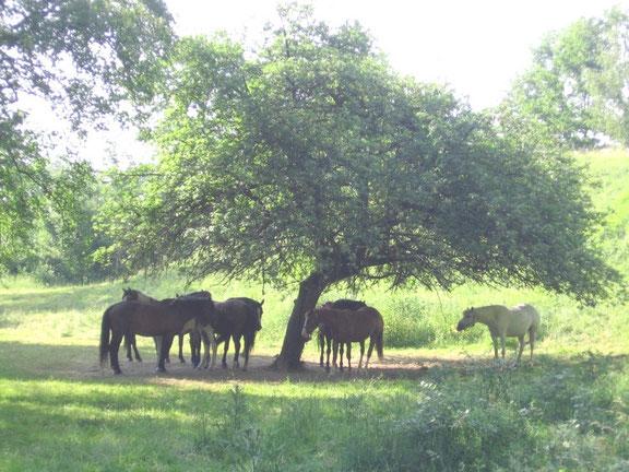 Gagner en confiance par la relation avec le cheval : stage de développement personnel.