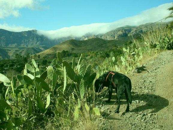 Ayla auf einer Wanderpause in den Bergen Gran Canarias