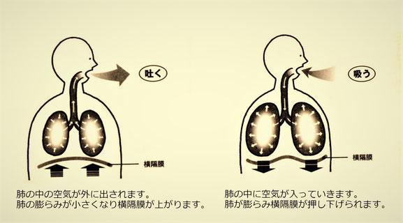 横隔膜呼吸のイメージ画像