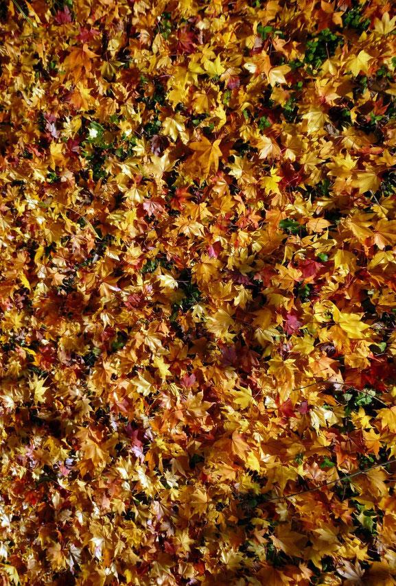 落葉の絨緞