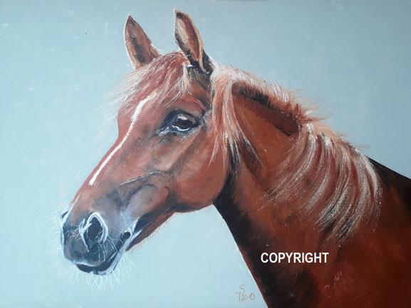 Pferdeporträt: Kopf und Hals eines braunen Pferdes seitlich dargestellt