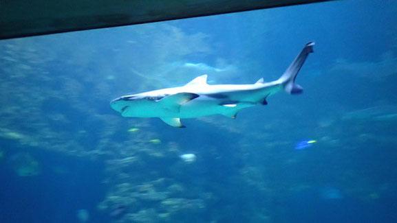 Hai im Meeresmuseum in Stralsund