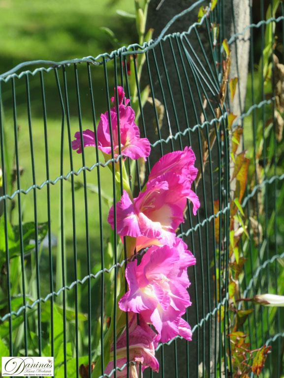 Blumen im Herbst Garten - Gladiolen by Daninas-Kunst-Werkstatt.at