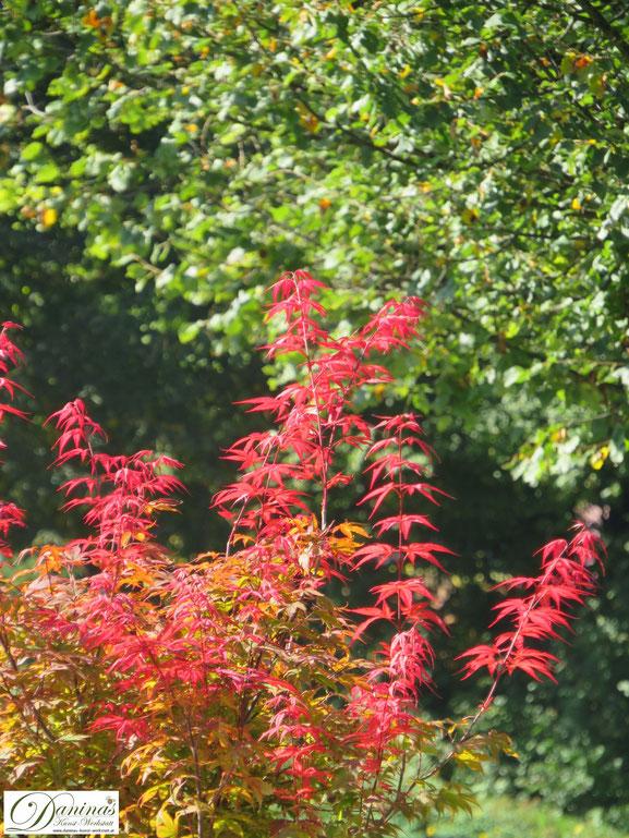 Wunderschöner Herbst: Bunte Herbstblätter auf Bäumen und Sträuchern & kreative Landart Ideen - by Daninas-Kunst-Werkstatt.at