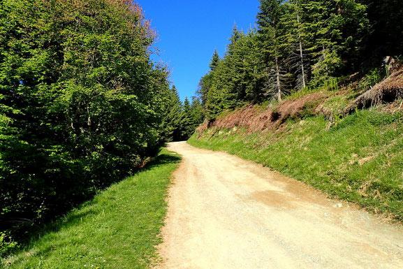 Je prends la piste qui se dirige vers le Col de Bazès.