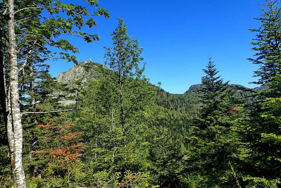 A travers la fôret, j'aperçoie le Pic de Bazès et à sa droite le Pic de Navaillo.