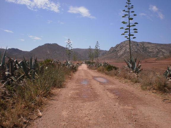 Imagen de Esther Cortavitarte. Cabo de Gata. Almeria.
