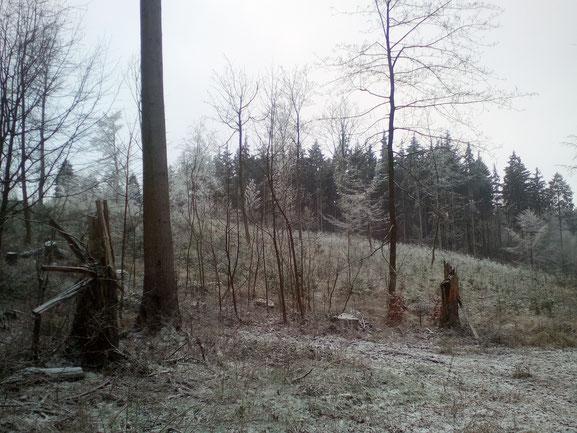 Forstwirtschaft Mecklenburg-Vorpommern, Foto J. Heller