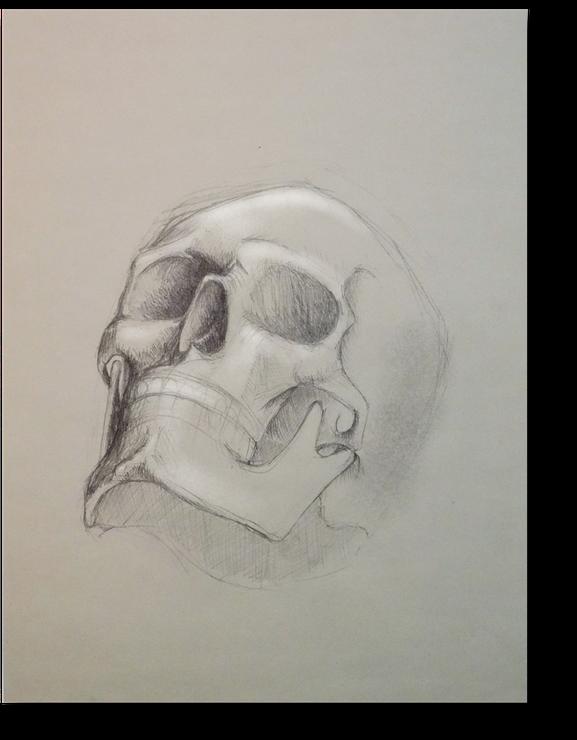 Bleistiftskizze eines Totenschädels. Zeichnung eines Totenschädels von Gunter Schmidt Bildhauer.
