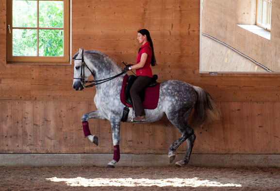 "Anja Beran and P.R.E. stallion ""Ofendido"""