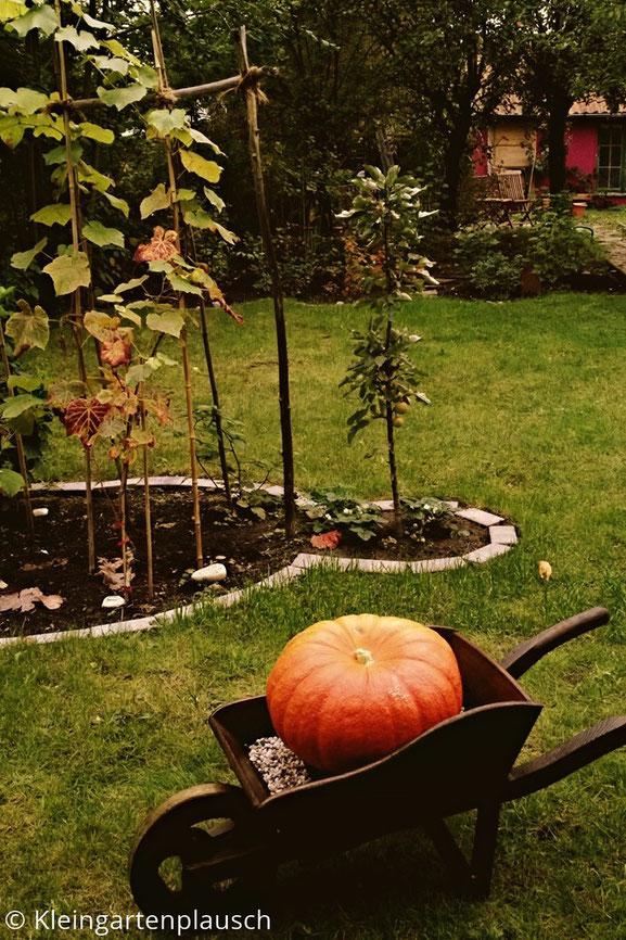 Dunkelbraun gestrichene Holz-Schubkarre mit Riesenkürbis darin, im Hintergrund Garten und ganz hinten Hütte