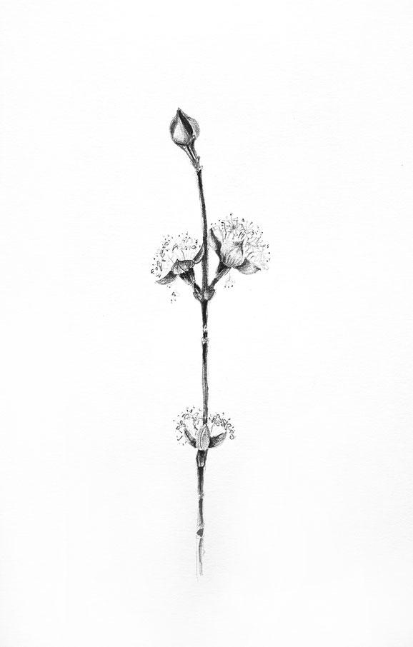 o.T.   Bleistift auf Papier, 29,7 x 42 cm