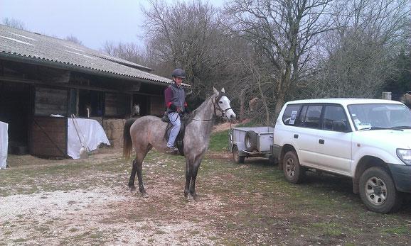 débourrage cheval arabe d'endurance