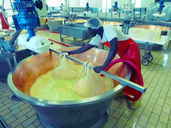 Der Parmesankäse wird geschöpft