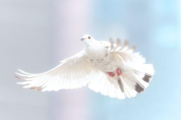 Frieden nach einem Streit