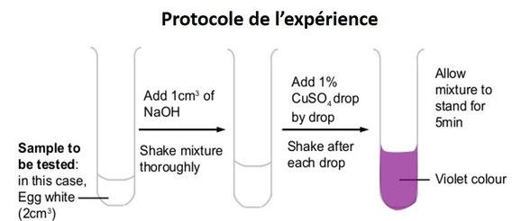 Protocole du test du Biuret. Source: internet modifié.