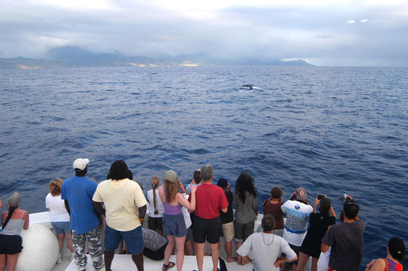 Wale watching, Dominica, Karibische Inseln, Karibik