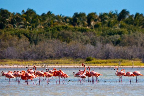 Birdwatching, Dominikanische Republik, Karibische Inseln, Karibik