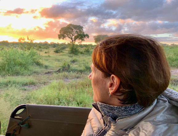 Von der Safari in den Lockdown