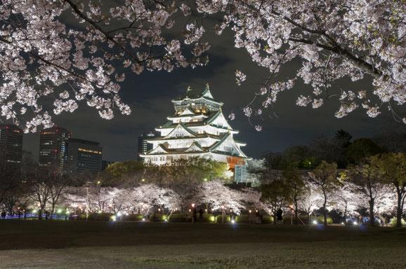 大阪城と夜桜 6 torayukiさん