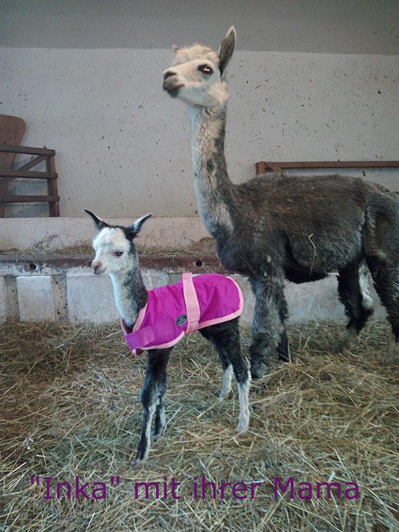 """Unser  neuer Zuwachs: """"Inka"""" , ein süßes, kleines Mädchen!!"""