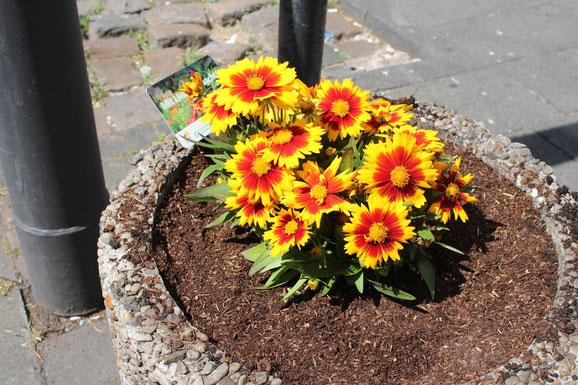 Frisch gereinigter und bepflanzter Blumenkübel.