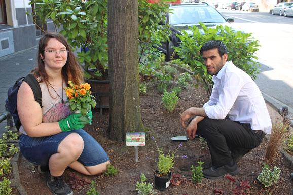 Frische Pflanzen für unsere Beetpaten von Doy Doy.