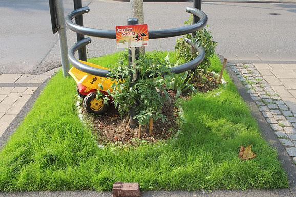 Gestaltetes Beet von einem Nachbarn auf der Berliner Straße, Köln-Mülheim