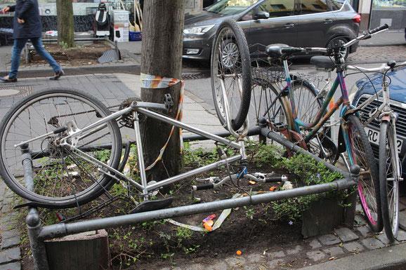 Wirklich nicht schön! Angekettete Fahrräder und Fahrradwracks um Baumscheiben.