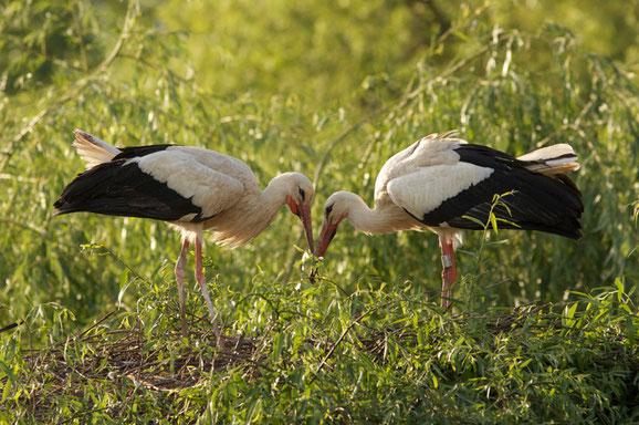 printemps-des-cigognes-munster