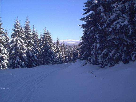 Langlaufloipe im Oberharz mit Brockenblick