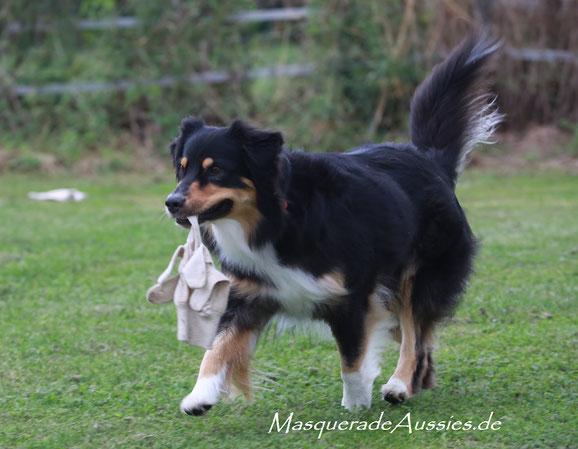 Weltrangliste ASCA Obedience: #2 SUPERDOG ODX,  #10 UTILITY DOG , #4 ODX DOG: Zestforlife Tiranog Masquerade ODX CDX UD REX RMX REMX DNA-VP