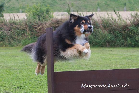 Weltrangliste ASCA #7 Obedience ODX DOG: Masquerade Date of Destiny ODX CDX RNX REX RMX