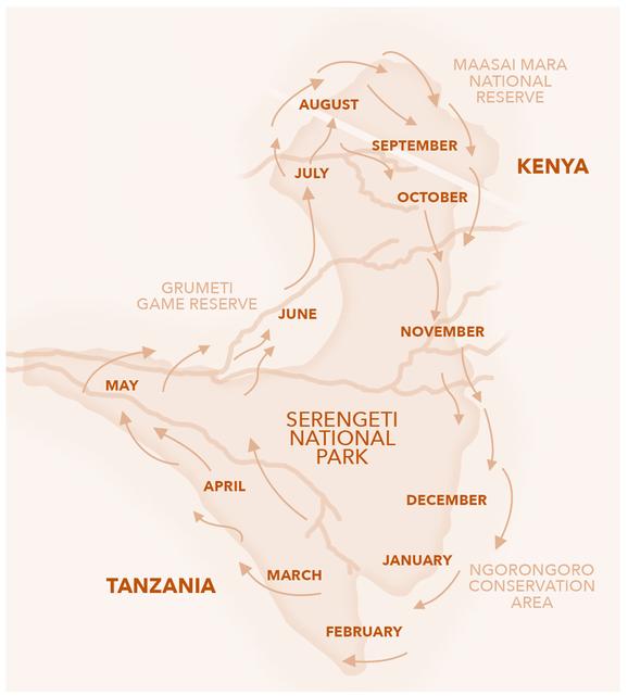Tiermigration Tansania