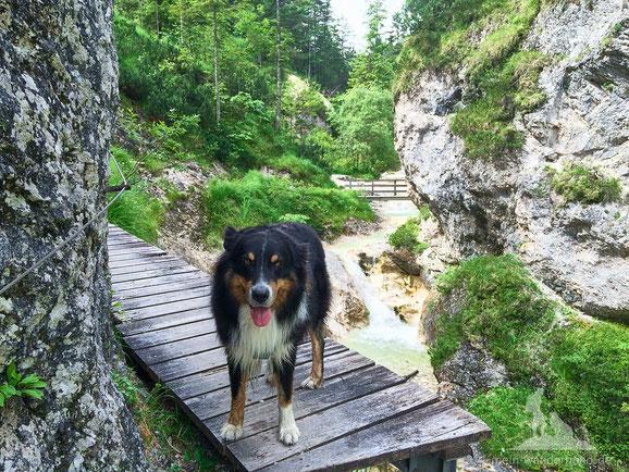 Wandern mit Hund in der Aschauer Klamm.