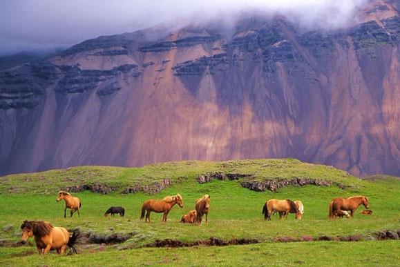 L'Islande et ses chevaux