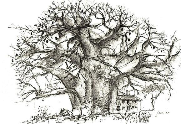 Baobab, Dar es Salaam 1995 (Bleistift)