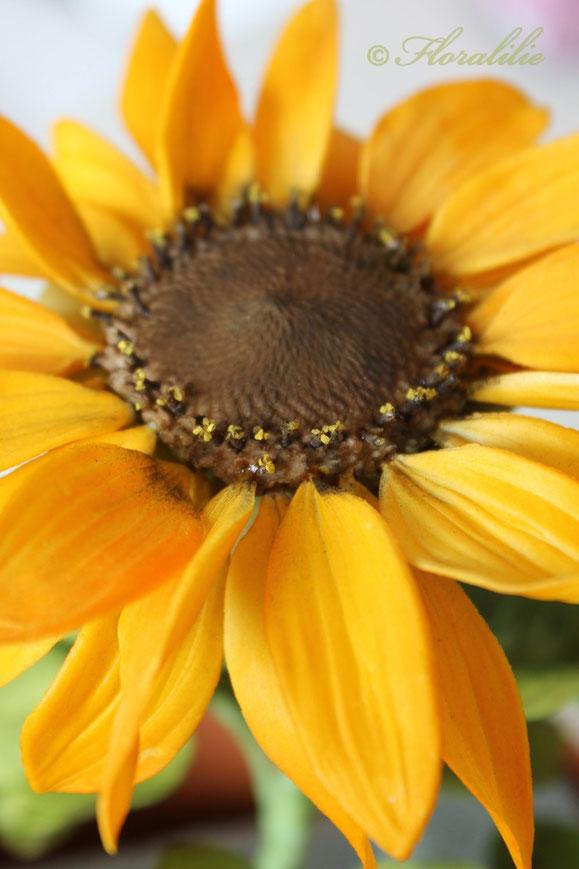 Sonnenblume aus Zucker von Floralilie