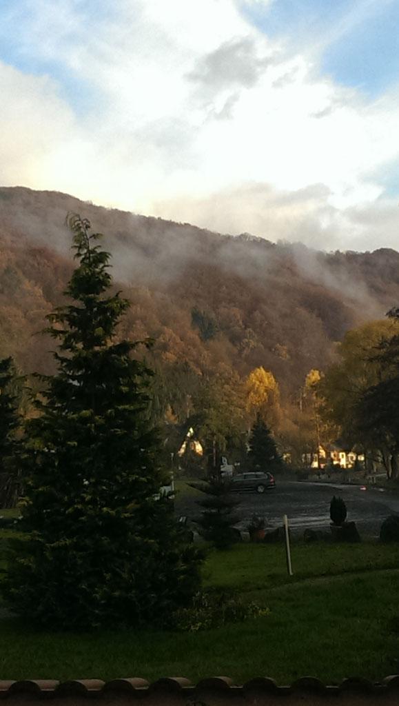 Bild zeigt Wald am Berg